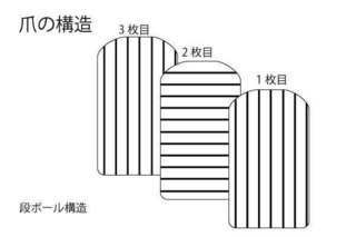 爪の構造.jpg
